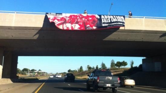 hamilton abortion banner
